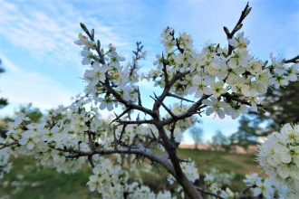 tree-3286524_1920