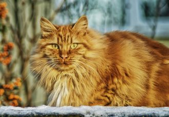cat-67345_960_720