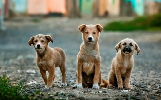 dogs-984015_1920