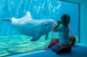 A tu per tu con delfini_giochi da finestra_7341