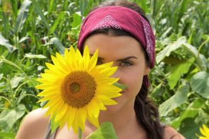 sun-flower-2699771_1920