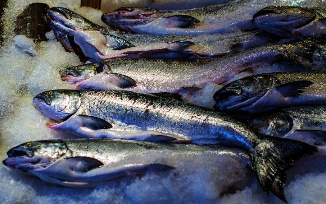 frozen-fish-1100470_1920