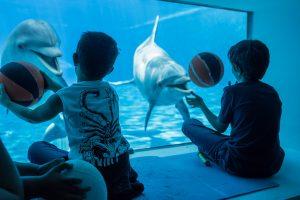 A tu per tu con delfini_giochi da finestra_7318