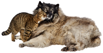 dog-and-cat-3128190_1920